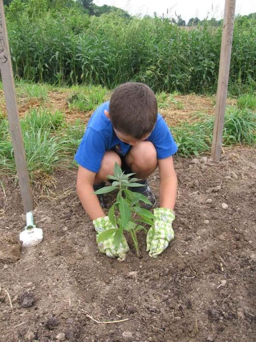 Mary McCann Park Community Planting